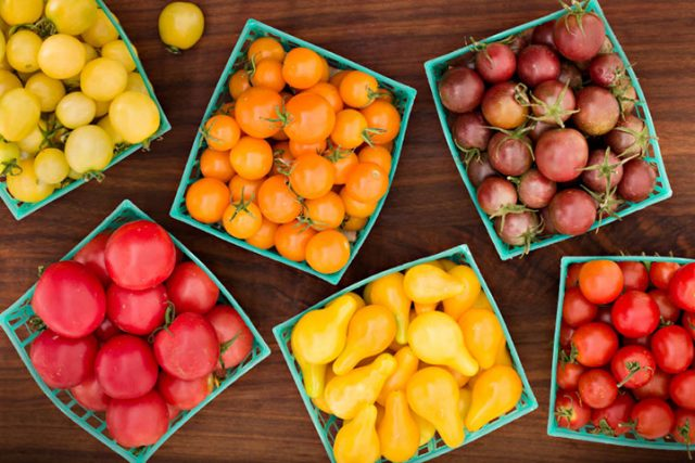 Genetic Modification Food Facts