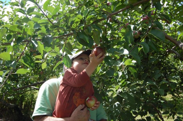 Route 11: Maine's Road To Apple Picking