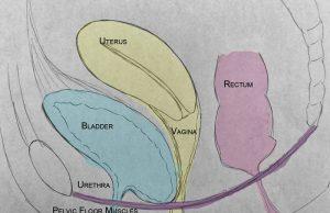 Guide to Understanding Uterine Prolapse