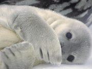 Animals, Antarctica